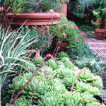 Domestic Landscaping in Didsbury